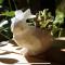 حوض نباتي على شكل أرنب